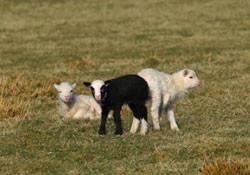 Betrüger und schwarze Schafe im Franchising erkennen