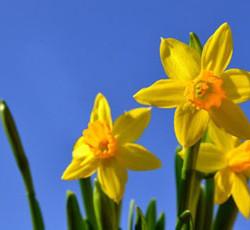 Der Franchise-Treff wünscht Frohe Ostern!