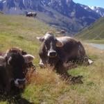 Franchise-Wirtschaft in Österreich entwickelt sich positiv