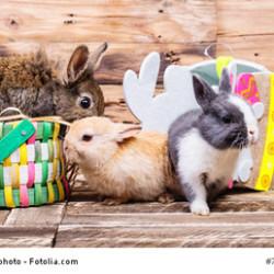 Franchise-Treff wünscht Frohe Ostern